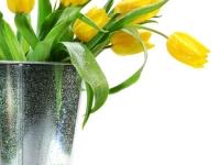 Muursticker, bloemen, tulpen