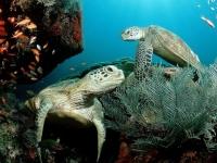 Muursticker, schildpad